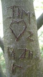 Tree_68b5_uptrees.co.uk