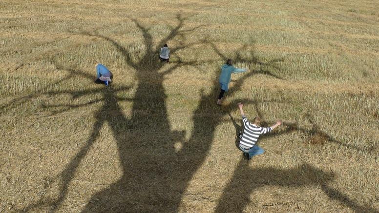 Tree_74h_uptrees.co.uk