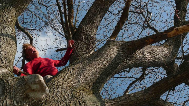 Tree-341a