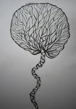 Virginia Valli - placenta tree