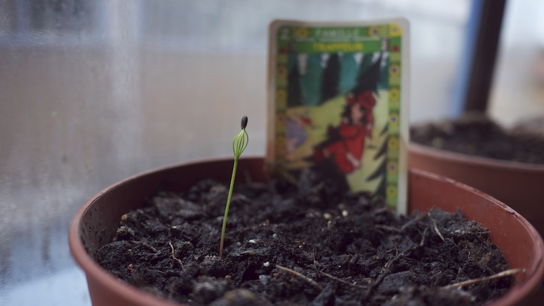 family tree seedling3