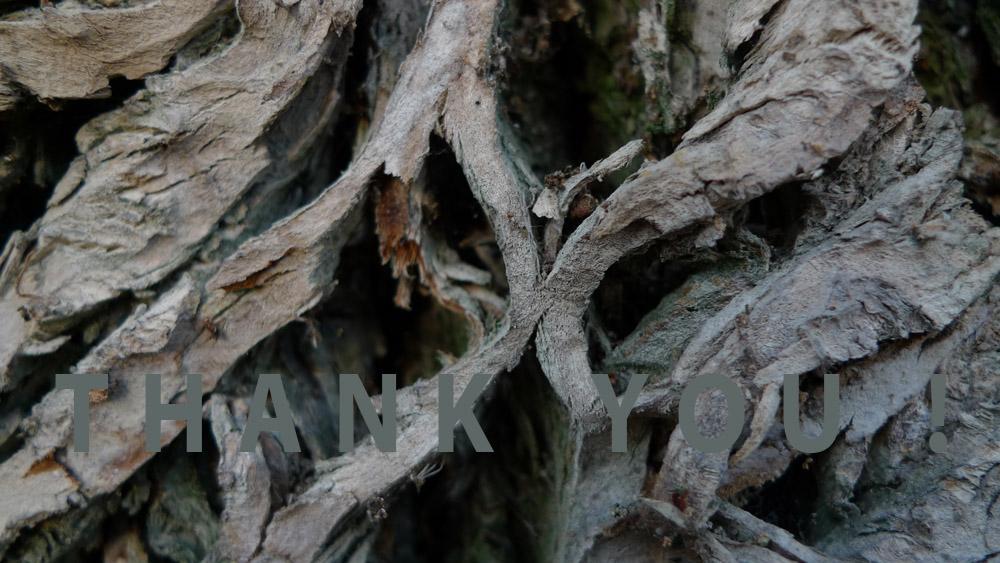 Art of Climbing Trees - thank you 07