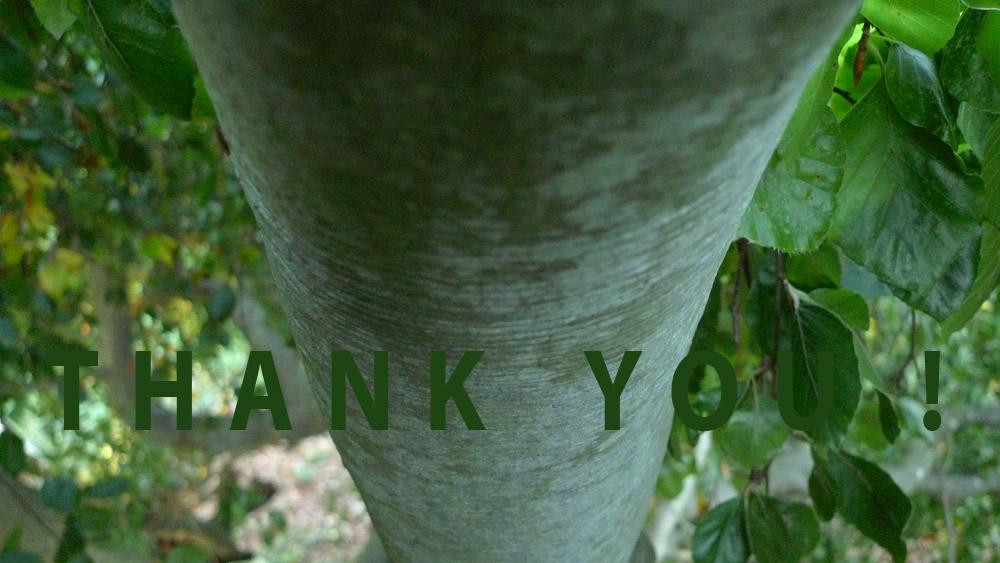 Art of Climbing Trees - thank you 10
