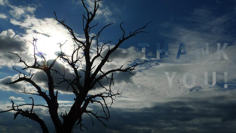 Art of Climbing Trees - thank you 12