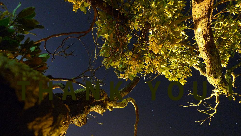 Art of Climbing Trees - thank you 13