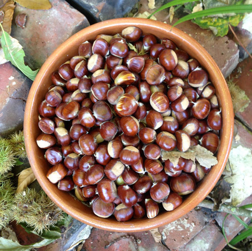 chestnuts-01a