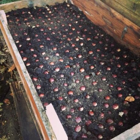 chestnuts-02