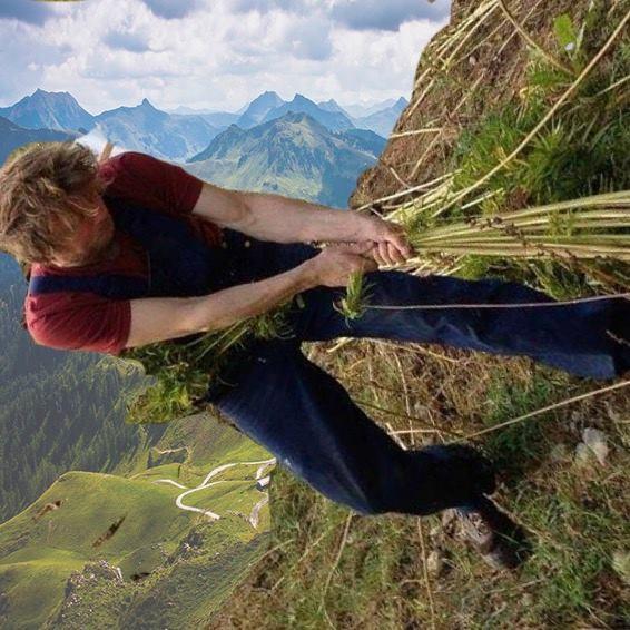 hemp harvest on mountain